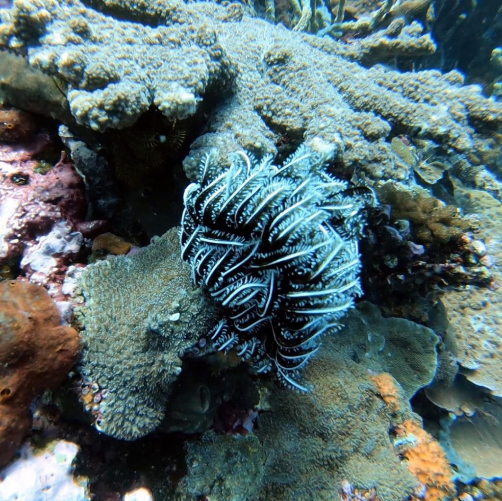 Picking Up Dive Sites in Bali; What to Consider