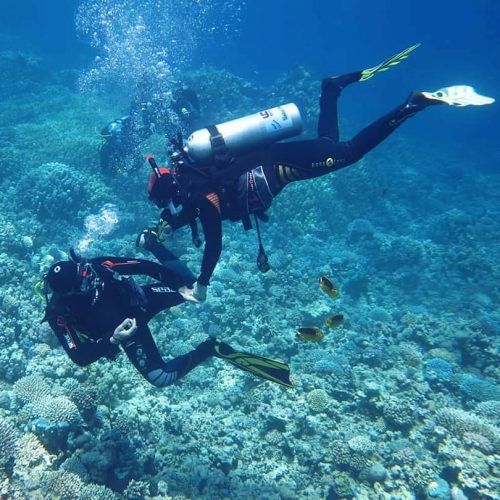 Surprising Fact: Scuba Diving is Actually Good for Disability