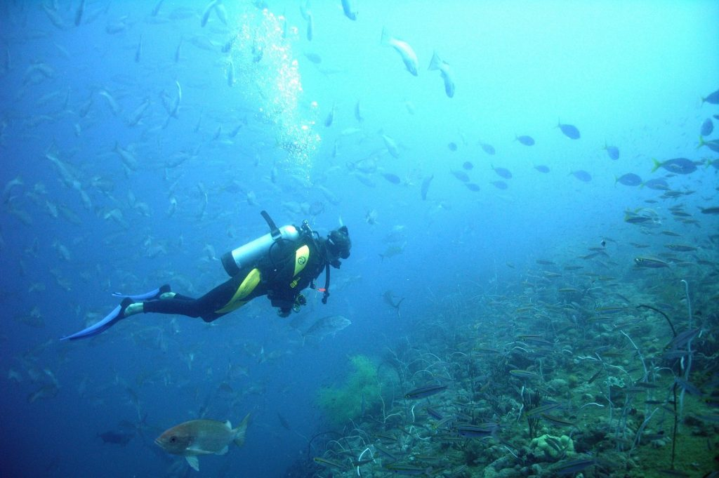 Scuba Diving Komodo, Exploring Dive Sites From North To South